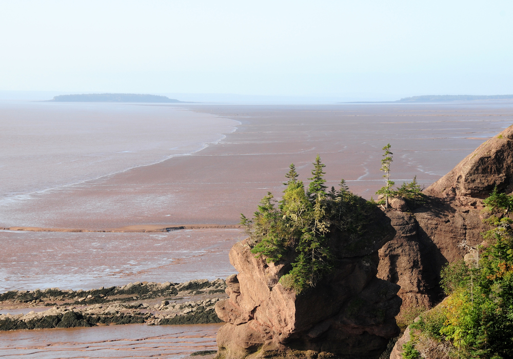 Whale Watching on the Bay of Fundy 4