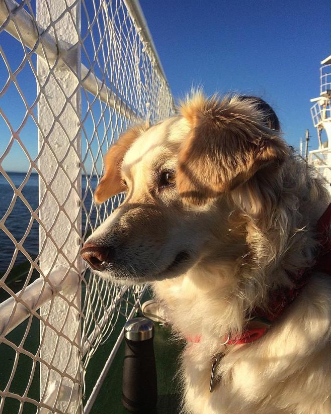 dog-on-boat-deck