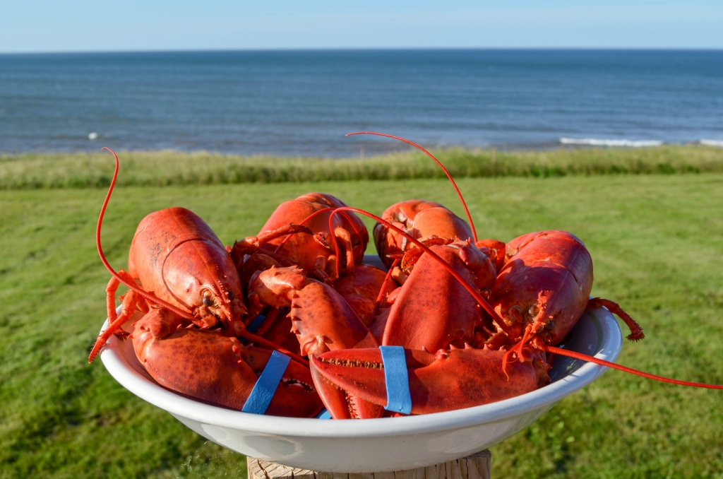 Adventures for Spring in the Maritimes 3